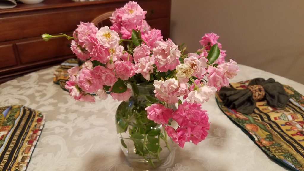 Wild pink roses in a clear glass vase, on a kitchen table.